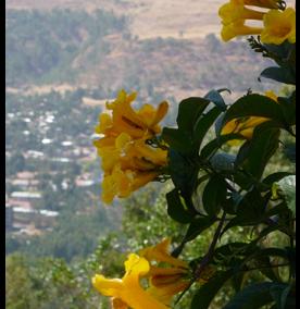6 days-trekking tour ittenerary of Ethiopia/Lungo local tour Ethiopia/