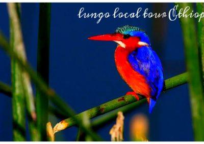 30-Day Birdwatching Itinerary