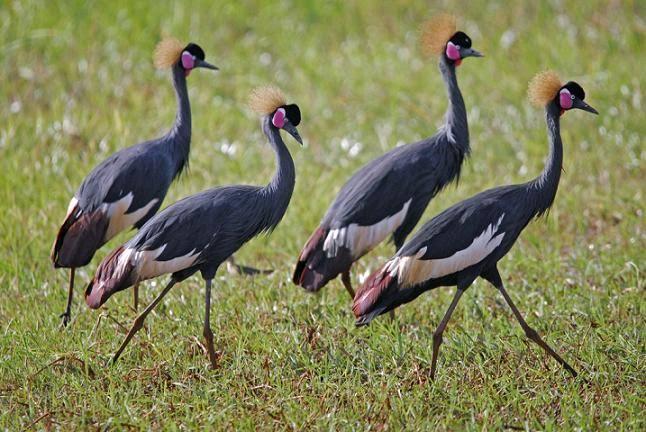 12 day-itenerary bird watching tour in Ethiopia|Lungo local tour Ethiopia