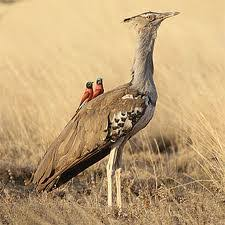 10 days-itenerary birds of Ethiopia|Lungo local tour Ethiopia