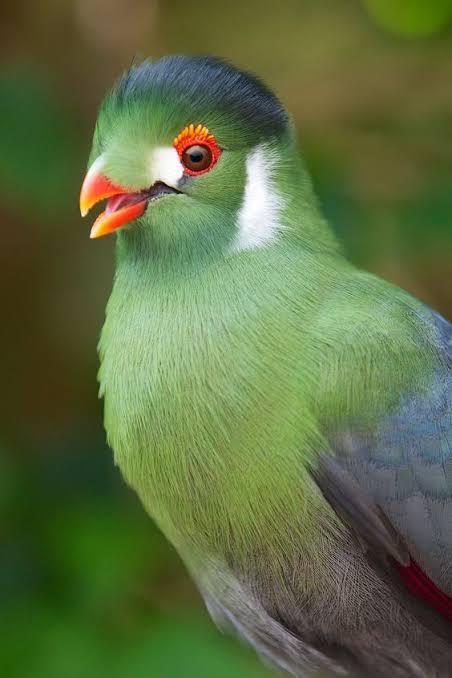 25-Day Birdwatching Itinerary