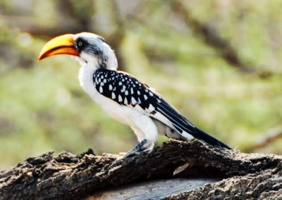 2 days 1 night ittenerary bird waching-Non Touristic Ethiopia Tours