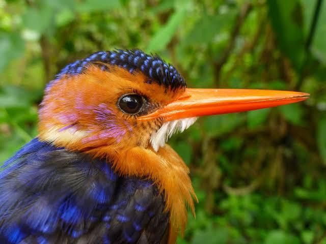 6 days Ethiopian bird waching ittenerary|endemic bird Ethiopi today