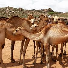 4 days-tour to the east Ethiopia